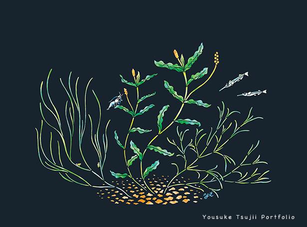 宍道湖の水草