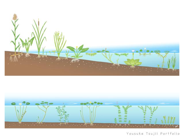 水草生育環境断面イメージ