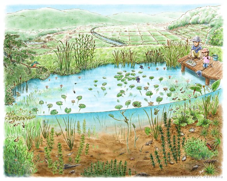 ため池の水草